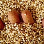 Kasza quinoa – 5 właściwości, cena, jak gotować- Twoja rewolucja!