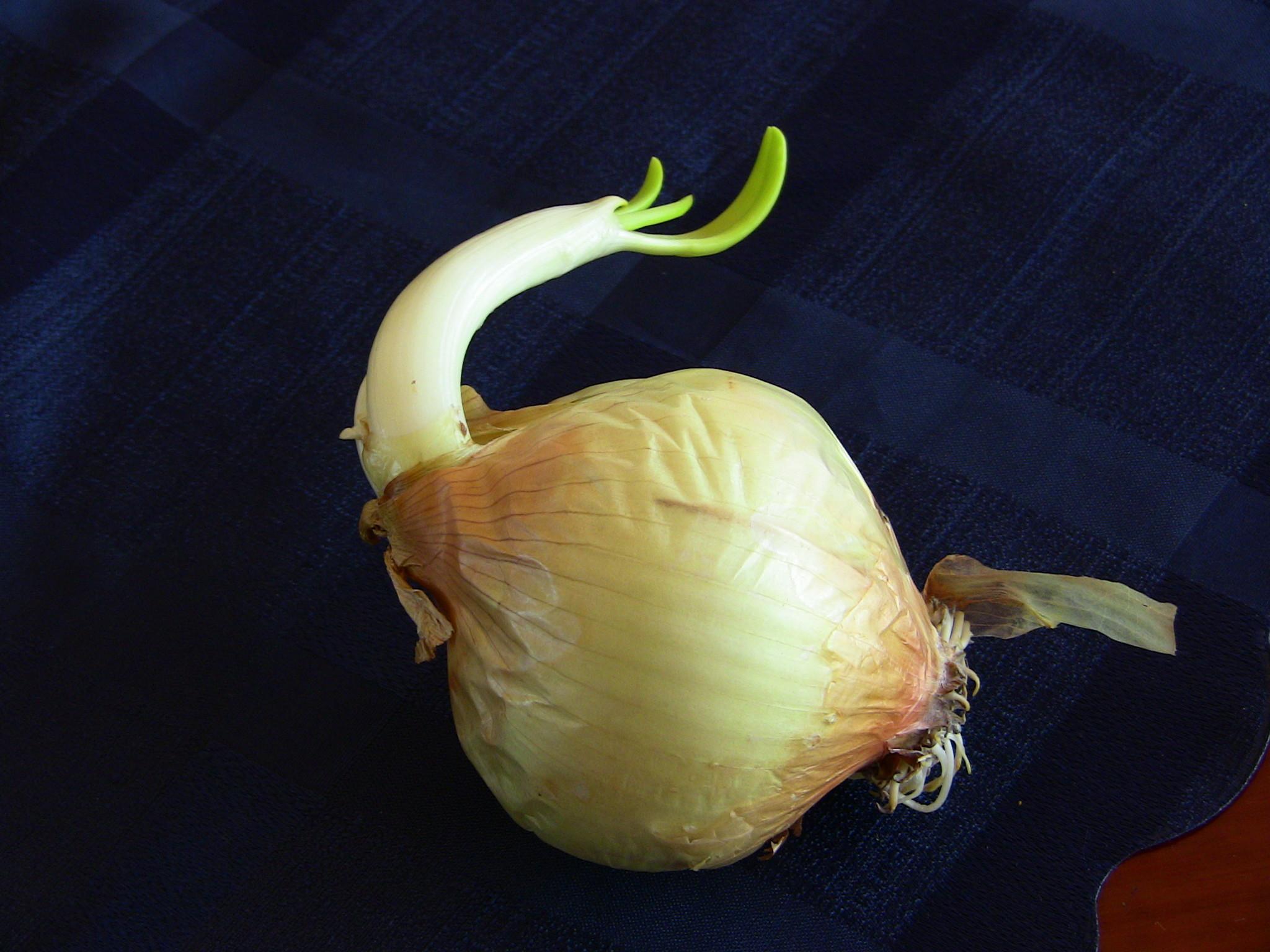 Maseczka cebulowa na trądzik