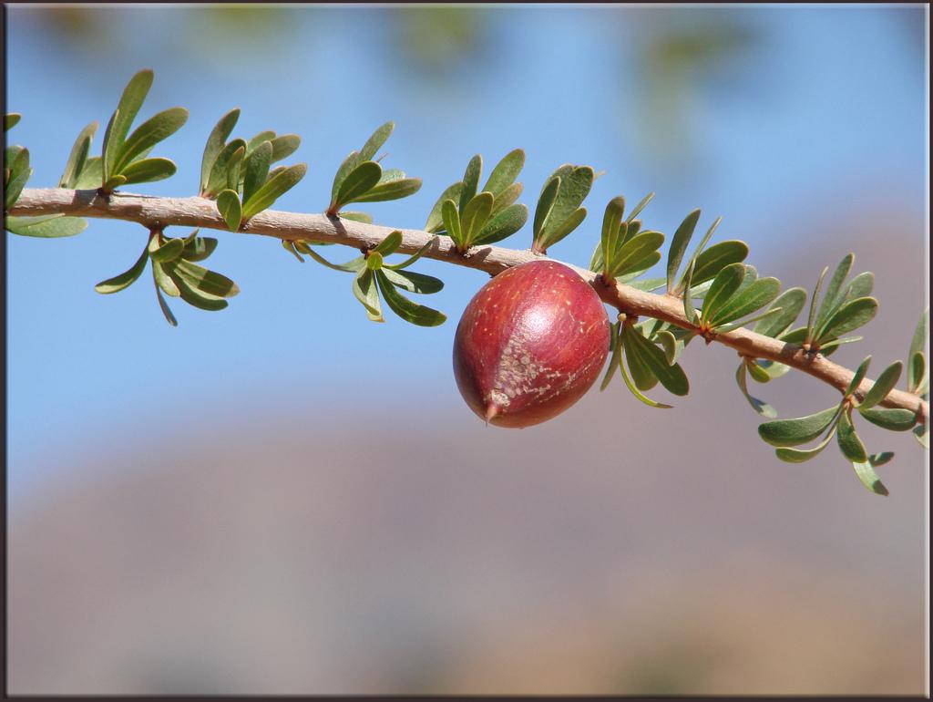 Gałązka z owocem