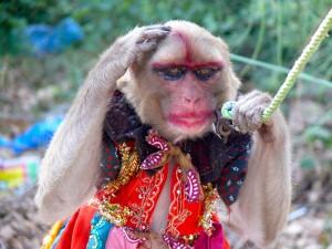 Umalowana małpka