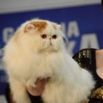 Wystawa kotów w Łodzi!