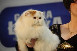 Kot z wystawy w Galerii Łódzkiej
