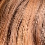Gęste włosy – sposoby bez tajemnic!