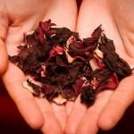 Herbata z hibiskusa – właściwości lecznicze odmładzającej herbaty