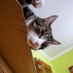 Mój kot i cukrzyca – ratujemy Tytusia!