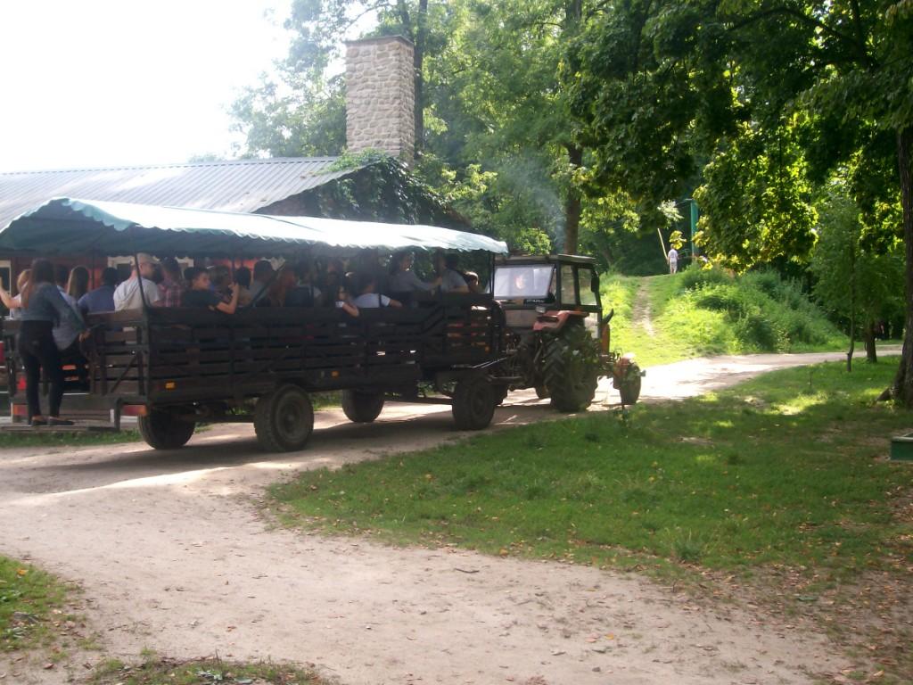 Kurozwęki Safari Bizon