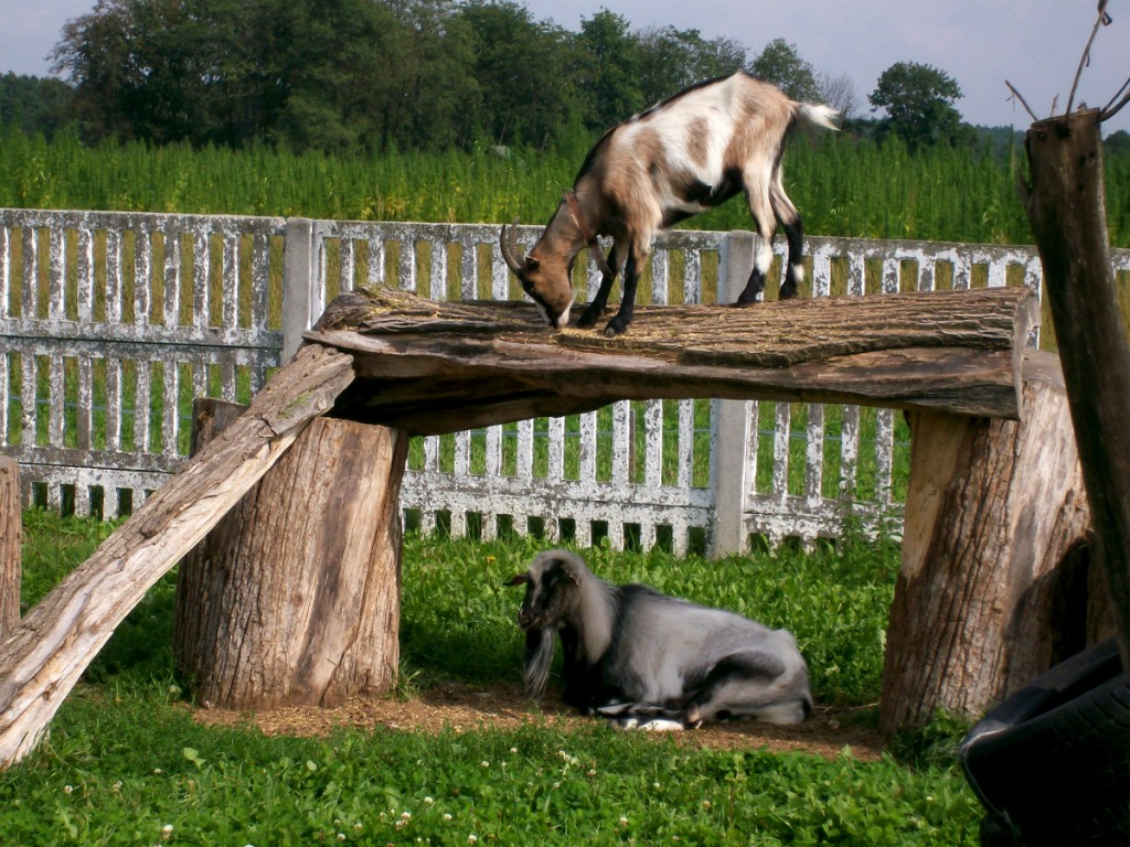 Labirynt Kurozwęki zoo