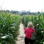 Labirynt z kukurydzy – Kurozwęki, bawmy się, cieszmy się!