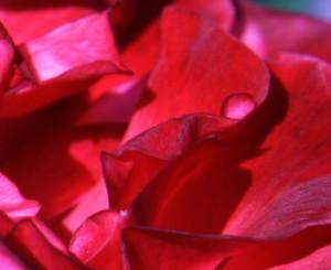 Olejek z drzewa różanego