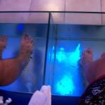 Rybi pedicure – spa dla stóp i rybi żer czyli Fish Spa!