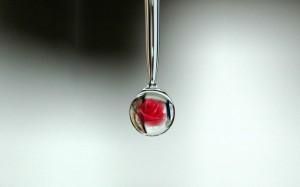 Woda różana Dabur