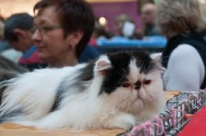 Wystawa kotów 2013