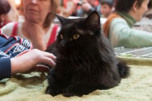 Wystawa kotów Łódź