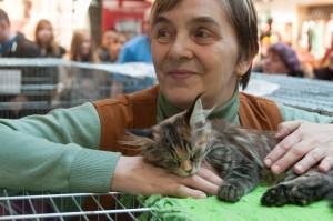 Wystawa kotów w Łodzi